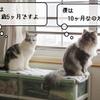 猫雑記 ~むく10ヶ月の体重測定~