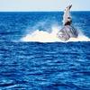 変わる環境 立ち泳ぎするクジラと街の風景