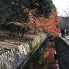 紅葉が色づく小径「哲学の道」で古都を満喫