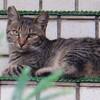 8月5日 早朝の金沢ひがし茶屋街の猫さま & ハイディーワイナリーでランチほか