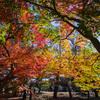 奈良の紅葉を富士フイルムの色で その1