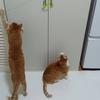 【猫のおもちゃ】勝手に遊んでくれる 「CattyManじゃれ猫 びょ〜ん ミツバチ」