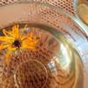 菊のお茶と、菊見の宴。【重陽の節句】