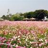 【韓国ワーホリ体験談】初期費用と生活費とバイト代公開します