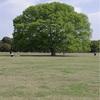 昭和記念公園のあの木はてっぺんに金魚草乗せればあの木になると思う