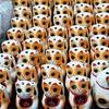 福猫加持開白 お里帰りの福猫が先に発送されます。