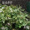 春風 2011/05/05