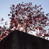 木場茂森橋柱の紅葉