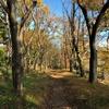 晩秋の色づく多摩・町田を歩く