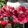 次々と開花!!