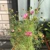 再び開花^ ^