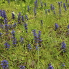 土手の草花と庭のバラ