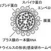 新型コロナウィルスの詳細が分かる記事