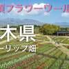 ドローン空撮【那須フラワーワールド】チューリップ畑!栃木絶景
