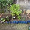 【家庭菜園】畑、再拡張!!(写真あり)