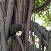 台北の大安森林公園で小動物を眺めてみる