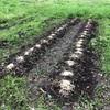 ジャガイモを植えたよ今年の初作業