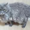 慢性腎不全の猫が腎炎になった時の治療費
