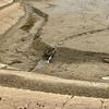 曽池(和歌山県紀の川)
