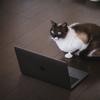 ブログの更新状況について