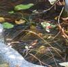 殺風景なひょうたん池