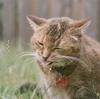 猫ちゃんの基礎知識①