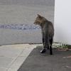 9月11日 四つ木から八広亀戸を経て横十間川の猫さま とその情景