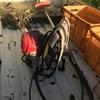 今朝は早起きし、筍採取場所の草刈り