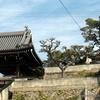 福善寺の鷲の松
