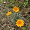 根をはらんばよ。庭の花 (≧∇≦)