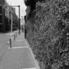 【今日の1枚】高価な住宅街の中、びっしりと蔦が絡まる壁が続いてます