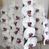 胡蝶蘭ってすごいんですね!
