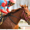 今日の競馬ニュースとか - 2011年2月3日