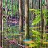 池の平「幻の池」(静岡県浜松)