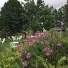 北海道 紫竹ガーデン