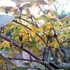 小春日和の庭