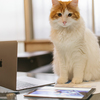はてなブログ運営11ヶ月の報告、アクセス数・収益・目標・予定。Twitter状況