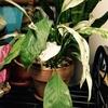 最近の植物達パート2