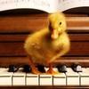 楽譜に縛られない音楽を楽しむ✨