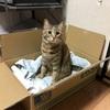 ネコに起因する今のコタツ撤去案件