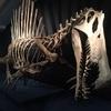 恐竜博に行きました!