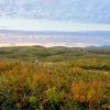 晩秋の山口県秋吉台。夕日に染まる草紅葉が美しかった