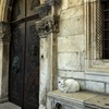クロアチア旅行(12)歴史建築で生きる猫たち@ドゥブロヴニク