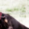 犬の甘噛み・噛み癖の心理としつけ。0.2秒が目標!瞬時の【NO/イケナイ!!】