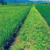 【田舎暮らしの散歩道】鳥の声と水の音に超癒される。