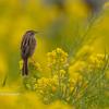 2020年2月29日の鳥撮り-神奈川県三浦半島(2/2)