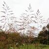 平和公園に秋色をさがす