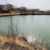 にごり池(滋賀県湖南)