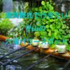 【神社めぐり】滋賀観光で行きたい守山市の穴場スポット
