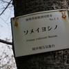 岐阜市加納天神町にある岐阜地方気象台の標本木。